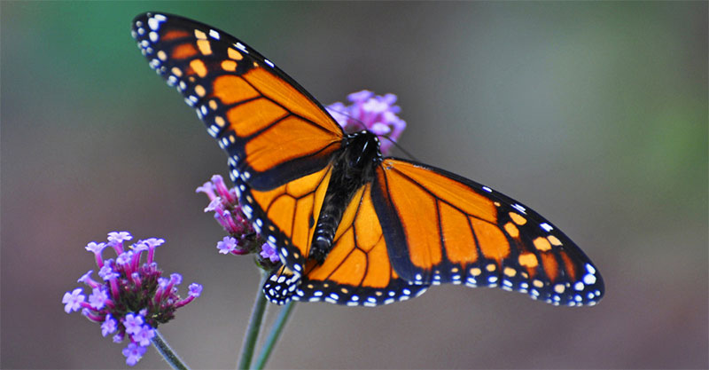 The Butterfly Metaphor  and  The Realm of the Heart